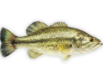 Bass Fishing Decal