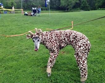 Greyhound , Giraffe costume
