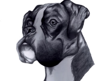 Boxer Dog Charcoal Sketch - 8 1/2 x 11
