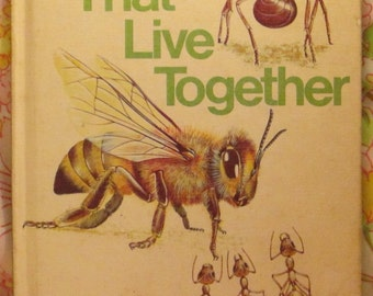 Insects That Live Together Starting Point Library - Michael W. Dempsey and Angela Sheehan - 1970 - Vintage Kids Book