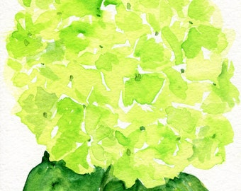 Hydrangea watercolor painting original  5 x 7 Lime Green flower art, original hydrangeas painting, hydrangea watercolors,  flower painting