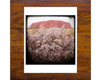 8x8 Print [JCP-387] - Uluru - flowers, pink, red, red centre, NT