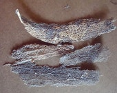 Prickly Pear Cactus Skeleton Fiber Mesh for Crafts Assemblage, Jewelry or Mixed Media