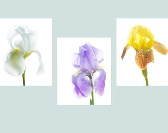Three Iris Print Set, Purple, Yellow, White Iris Photos, Botanical Art, Floral Art Print Set