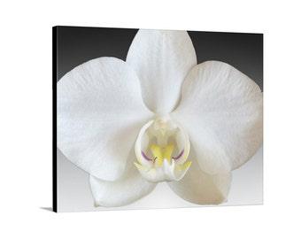Orchid Picture, Canvas Art, Flower Photographs, Orchid Flower Art, Floral Art, Fine Art Photography, Surreal Art, Flower Print, Orchid Print