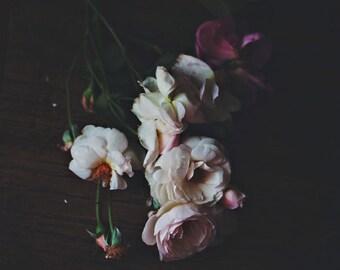 Still Life Photography - David Austin English Roses Dark Pale Pink Tones Nature Floral Garden botanical rose bouquet feminine cottage Photo