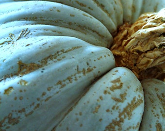 Blue Pumpkin, Halloween, Fine Art Photography Print, Fall Photography, Autumn Rustic Wall Art Decor, Pumpkin Wall Art, Halloween Home Decor