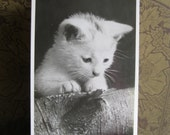 Antique Postcard. From my album Cats and Kittens. Real Photo. 1930 era