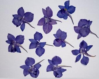Pressed Larkspur Flowers 30 each - natural purple color