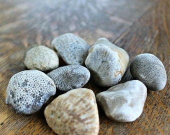 Variety of Fossils, Lake Michigan Beach Stones
