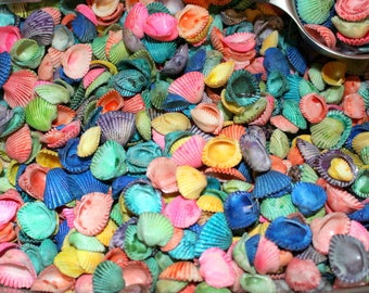"Cardium shells dyed-2""x3"" bag filled with assorted colors-Small shells-Clam shells"