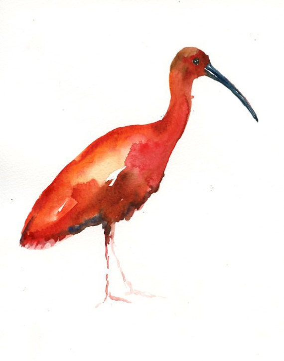 how to draw a scarlet ibis