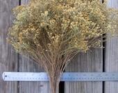 Dried Broomweed Bunch