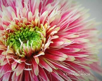 Gerbera Daisy Photograph, Garden Art, Pink Floral Wall Decor, Flower Photo, Spring Home Decor