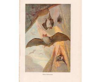 1912 ANTIQUE BATS PRINT original rare antique halloween animal bat lithograph