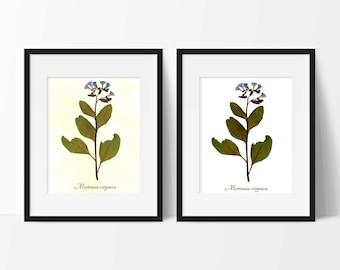 Virginia Bluebells Botanical Art PRINT- Pressed Botanical Reproduction