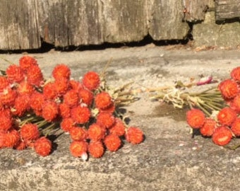 5 Bunches of Orange Gomphrena - Dried Flowers