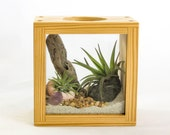 Shadowbox Air Plant Terrarium Kit by Midnight Blossom. Made from Repurposed Pine and Featuring Beautiful Live Tillandsia Plants