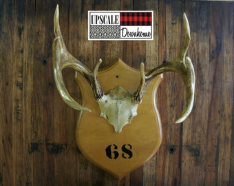 Vintage Antler Mount Plaque 1968 Taxidermy