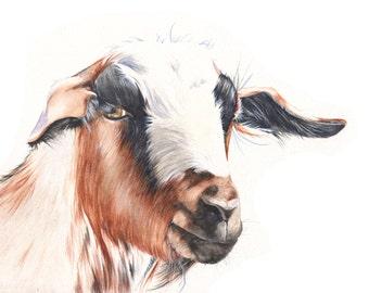 Goat print of watercolour painting A3 size largest print G5115- animal art- goat art- earth tones- farm art