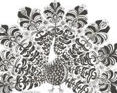 PEACOCK original line drawing // modern sketches by Elisaveta Sivas // 5,9 x 8,3' (14,9 x 21 cm)