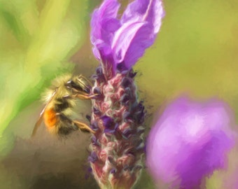 Bee photography, honeybee photo, macro insect photograph, bee print, whimsical image, bee art, lavender flower art, yellow, orange, green
