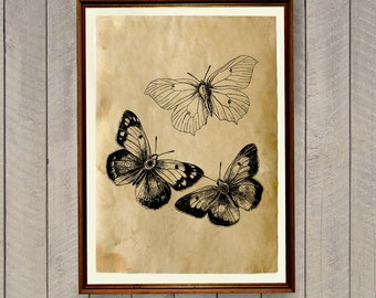 Rustic home decor Butterfly poster Insect art print AK644