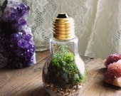 BRIGHT IDEA Live Terrarium Desk Object