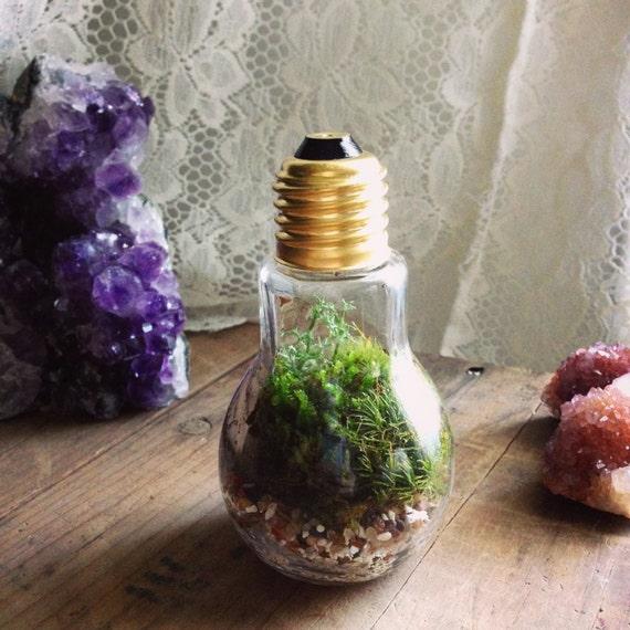 BRIGHT IDEA Live Terrarium Desk Object