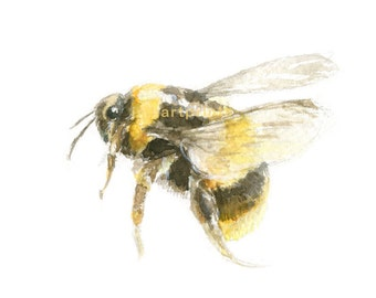 Watercolor Bee, Honey Bee Print, Bee Print