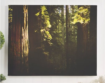 """redwood canvas gallery wrap / nature forest tree art print / green large canvas wall art / 8x10 11x14 16x20 24x36 / """"sunlit redwood forest"""