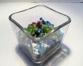 Succulent Plant Square Glass Planter and 14 oz soil presold for mymarketstall.