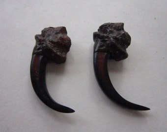 "2 Eagle Talon Claws  2"" Resin Replica Jewelry and Craft  Projects"