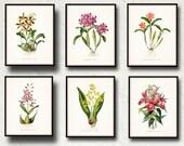 Tropical Orchids Botanical Print Set No. 4 - Giclee Canvas Print - Beach Decor - Coastal Decor - Prints and Posters - Orchids