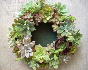 Succulent Centerpiece 12 inch