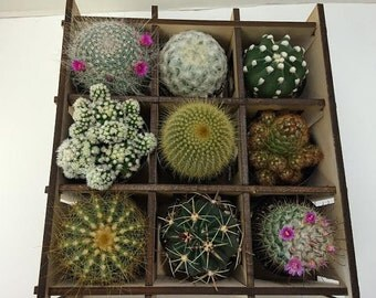 Cactus Plant Nine Cacti Shadow Box Complete Kit