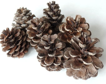 "Pinecones, 1 1/2"", Rustic Wedding Decor, Favors, Craft Supplies, Christmas Holiday, Vase Fillers, Autumn, A303"