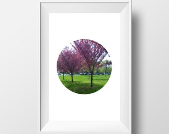 Trees in the Spring photograph, Pink flowers, downloadable and printable wall art