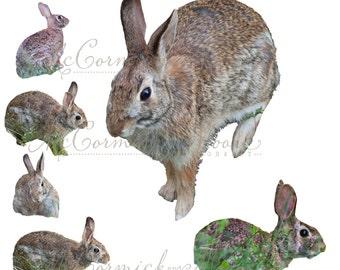 Bunnies Overlay - Rabbit Grass Woodland Creatures Overlay Photographer - Animal Overlay - Photoshop Overlay - Instant Download