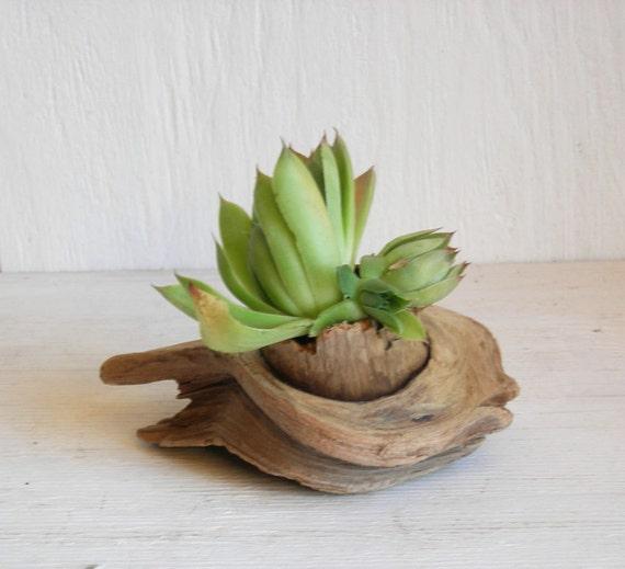 DRIFTWOOD BEACH DECOR Succulent Planter Natural Sculpture