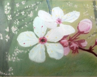 "Cherry Blossoms - giclee print of original pastel painting 10"" x 8"""