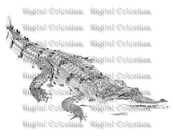 Crocodile Engraving. Crocodile PNG. Crocodile Prints. Crocodile Images. Crocodile Pictures. Crocodile Clipart. Crocodile Drawings. No. 0188.