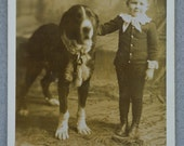 Antique Cabinet Photograph ~ Bernese Mountain Dog With Child