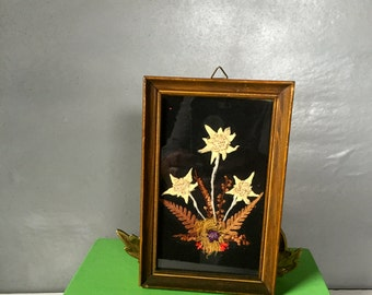 Small Vintage Framed Picture Made from Items From Nature