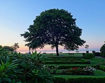 Lynch Park at Dawn, Beverly, MA, North Shore, New England, Ocean Decor, Lynch Park, Tree Photography, Tree Print, Tree Art, Tree Decor