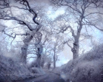 Magical Winter Tree Photograph, Ethereal Winter Trees, Enchanted Woodland Wall Decor, Pastel Trees and Country Lane Art Print