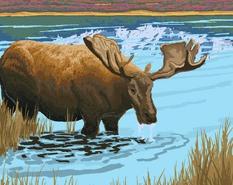 Alaska - Moose Drinking (Art Prints available in multiple sizes)