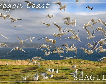 Oregon Coast - Seagulls (Art Prints available in multiple sizes)
