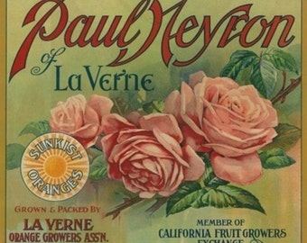 Paul Neyron of La Verne Orange Label (Art Prints available in multiple sizes)