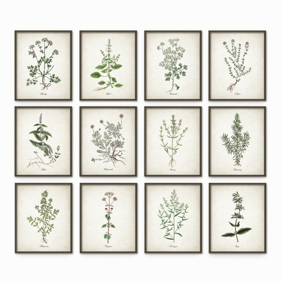Kitchen herbs wall art print set of 12 vintage botanical for Kitchen wall art sets